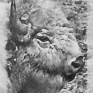 buffalo head by Ted Petrovits