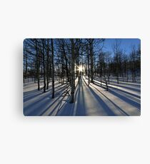 Wintery Lines Canvas Print