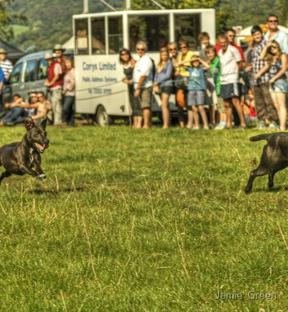 The Terrier Race...Pipped At The Post by Jamie  Green