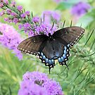 Tiger Butterfly by Linda Trine