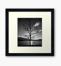 Tree by Loch Arkaig Framed Print