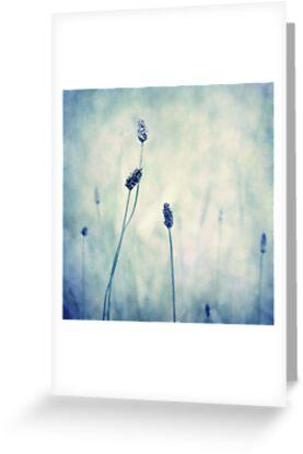 endearing  by Priska Wettstein