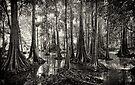Mangroves - Sabah, Borneo by Dean Mullin