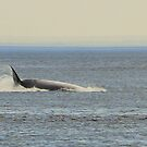 Quebec - Whale to Tadoussac. by Jean-Luc Rollier