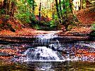 Autumn Falls  by Marcia Rubin
