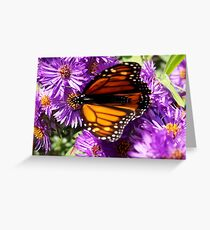 Butterfly Runway  Greeting Card