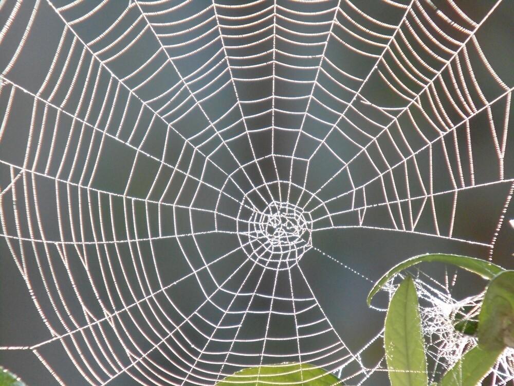 Spider web by SteveKeller