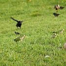 We are hungery birds 2 by kfurniz