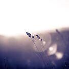 Wild Grasses by Matt Sillence