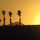 a line of palms at sunset by Christine Ford