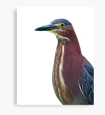 Heron Portrait Canvas Print