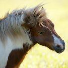 Pony by Zachary Golus