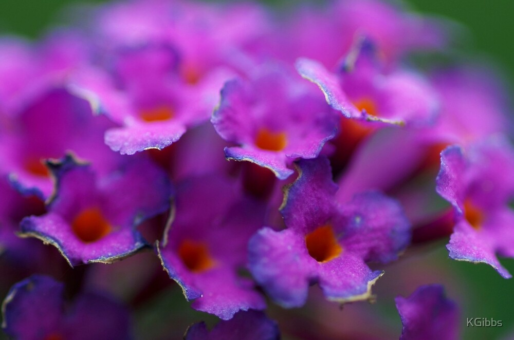 Flowers 1 by KGibbs