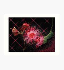 """Red Gum Blossom's"" Art Print"