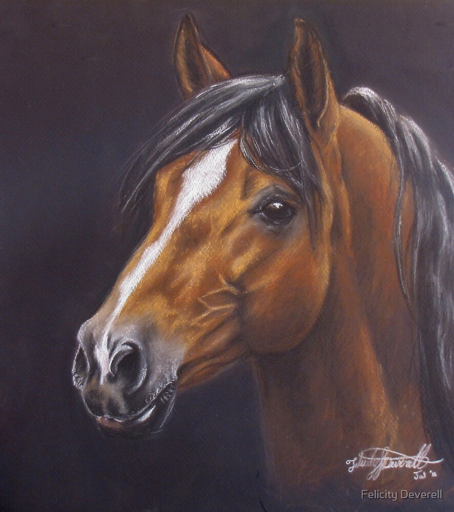 Andalusian Pony by Felicity Deverell