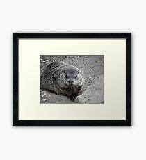 Groundhog day! Framed Print