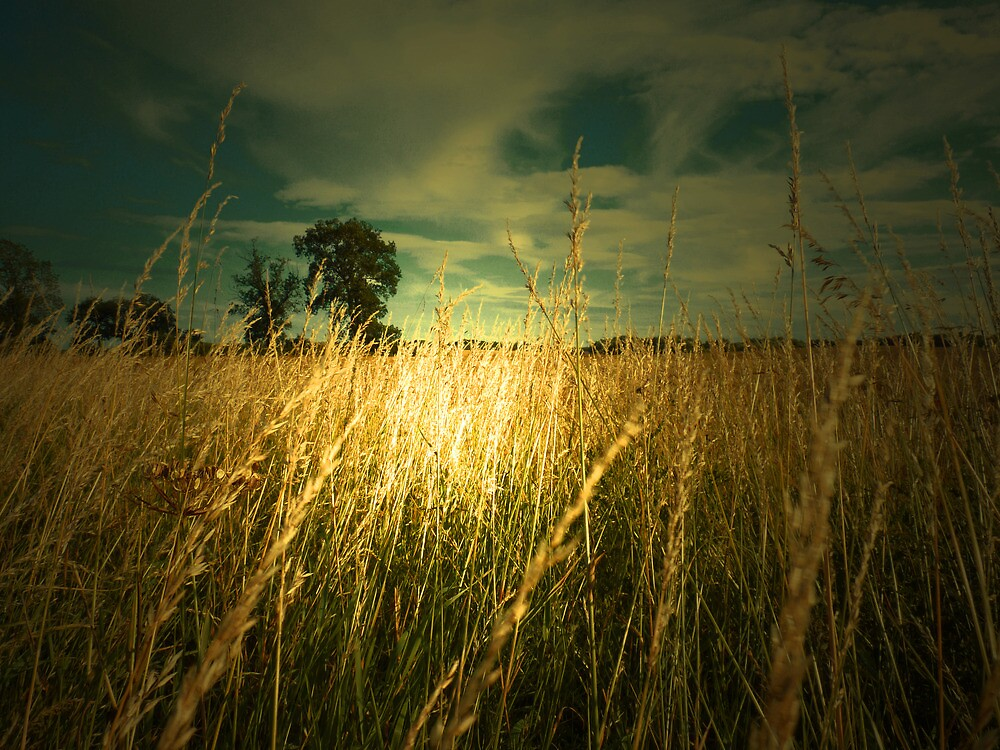FIELD OF GOLD by leonie7