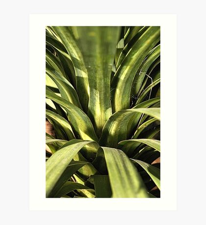 Palm Green Art Print