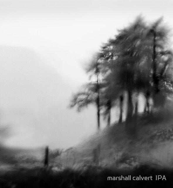 tree's in the rain von marshall calvert  IPA