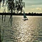 Sailing ~ Lake Reily by Diane Trummer Sullivan