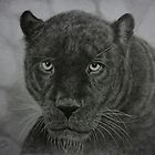 Black Leopard drawing by Istvan Natart