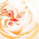 Into the white by Karen Havenaar