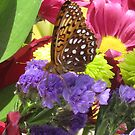 BBQ butterfly by Christine Ford