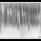 Winter Woodland by AdornmentPhotog