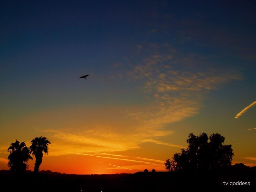 Bird In Flight At Sunset by tvlgoddess