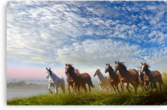 Spirit Of The Prairies by Igor Zenin