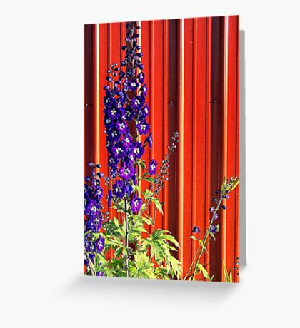 A Clash of Beauty (Lupines) Greeting Card