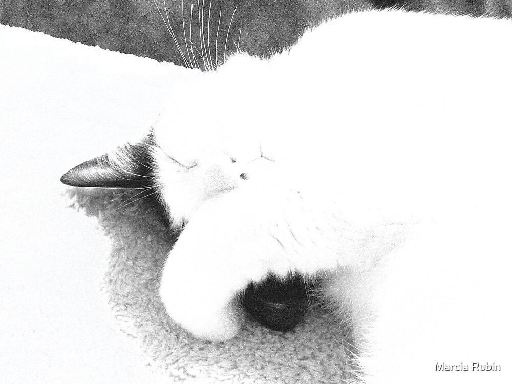 Catnapping Clifford by Marcia Rubin