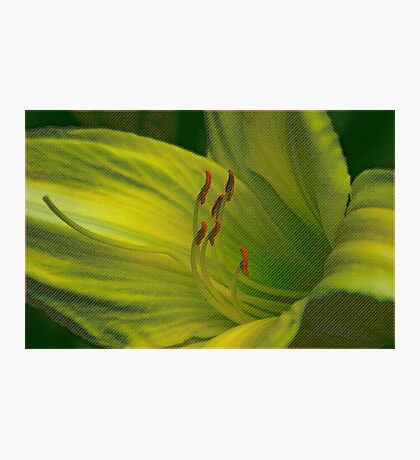 Rough Texture Lily Photographic Print