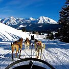 Dog Sledding in Wyoming by Nancy Richard