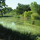 Bushy Lake's plant life by Lenny La Rue, IPA