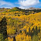 Colorado Golden Autumn Bliss by Bo Insogna