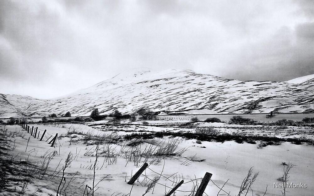 Black & White Scottish Highland Image by NeillMonks