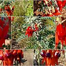 Sturts Desert Pea Collaged by Virginia McGowan