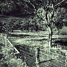 Yarriambiak Creek/Swamp by Jennifer Craker