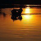 Golden Sarawak River by T.O. Ang