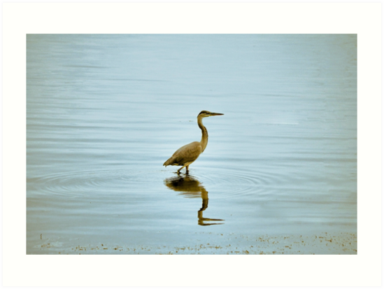 Blue Heron in Water by Amber D Hathaway Photography
