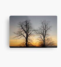 December sky at dusk - two trees Metal Print