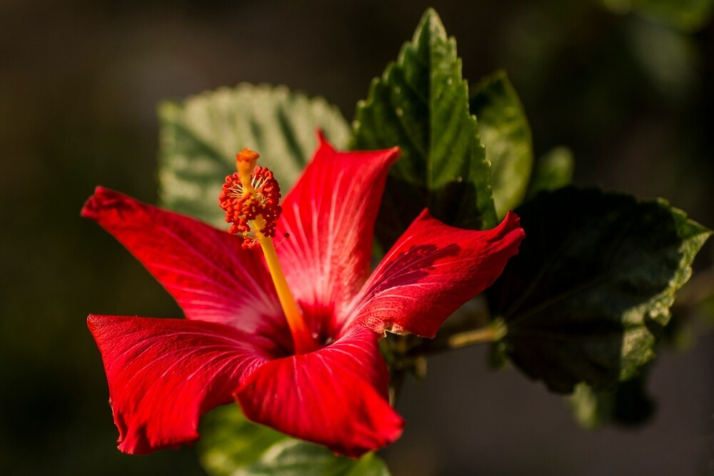 Playing With Depth of Field by Bryan D. Spellman