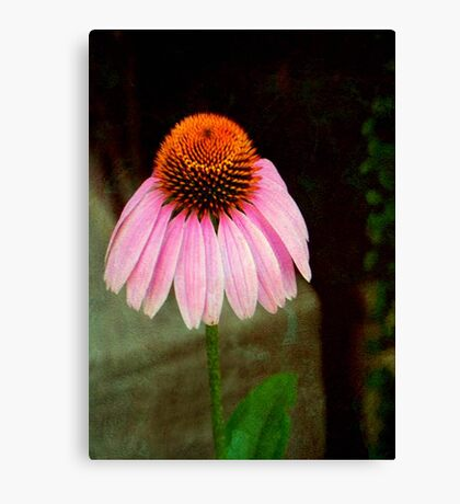 Cone Flower © Canvas Print