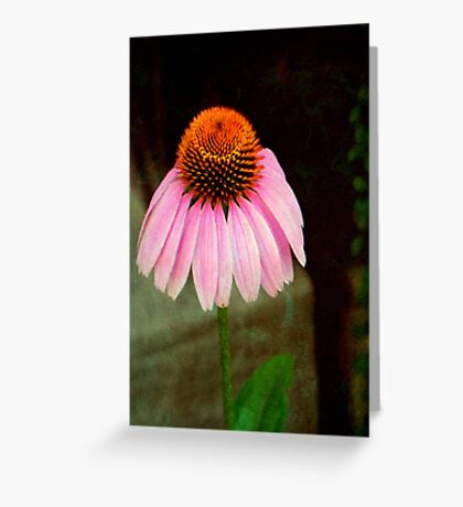 Cone Flower © Greeting Card