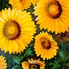 sunflowers by hangwilliamson