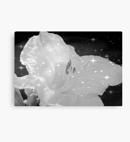 Diamond Lily © Canvas Print