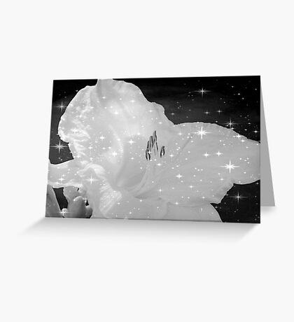 Diamond Lily © Greeting Card