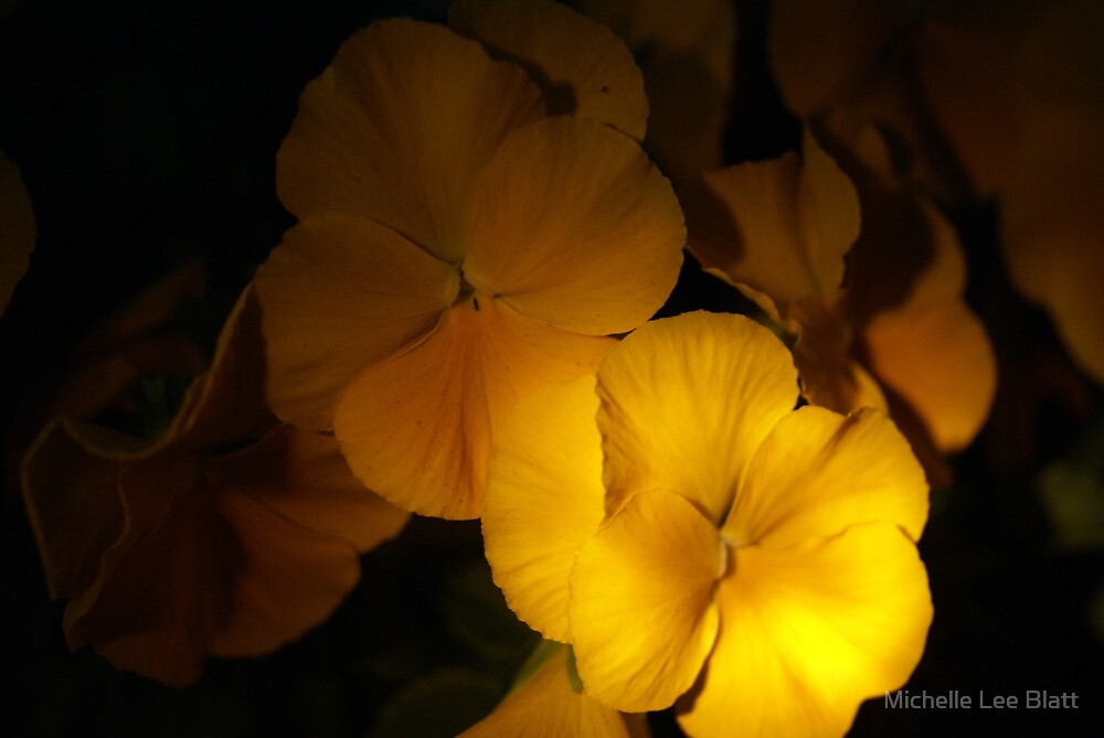 I STILL Get BUtterflies by Michelle Lee Blatt