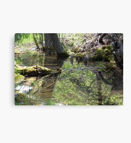 Reflections In A Forest Pond Canvas Print
